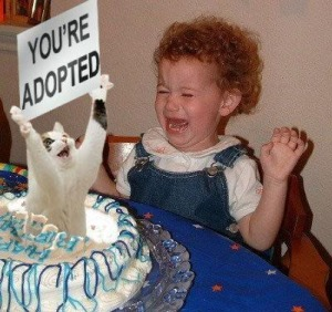 Cat-CatInBirthdayCakeYoureAdopted